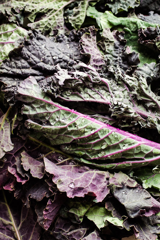 Dehydrated kale chips 4 ways {vegan + gluten free} - Marta's Plants